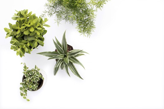 Greenery Styled Desktop Stock Images for Creatives